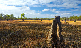 Termite Mounds. In Northern Territory, Australia Royalty Free Stock Photo