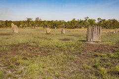 The termite mounds Royalty Free Stock Photography