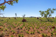 Termite mounds in outback Australia. Royalty Free Stock Photography