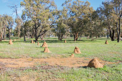 Termite Mounds. Red sand termite mounds in a rural farmland landscape with native trees under a blue sky in Western Australia Royalty Free Stock Images