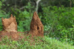 Termite mounds Royalty Free Stock Photos