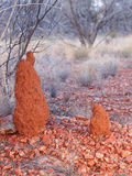 Termite Mounts in the outback Royalty Free Stock Photography