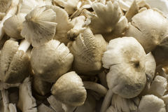 Termite mushroom Local food Thailand. Royalty Free Stock Images