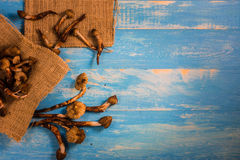 Termite Mushroom on a wooden table in blue. Royalty Free Stock Photos
