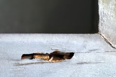 Termite nest hole at wooden wall, nest termite at wood decay window sill architrave, background of nest termite, white ant. The termite nest hole at wooden wall royalty free stock photo