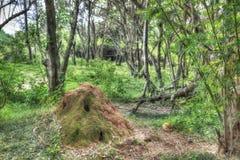 Termite nest in the jungle of Sri Lanka Stock Photos
