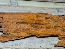 Termite nest pattern on old brown wooden wall. A Termite nest pattern can be considered as being composed of two parts, the inanimate and the animate on old royalty free stock image