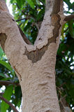 Termite nest Royalty Free Stock Images