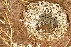 Termite nest underground. Royalty Free Stock Images