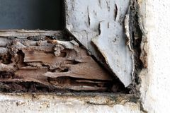 Termite nest at wooden wall, nest termite at wood decay window sill architrave, background of nest termite, white ant, background. The termite nest at wooden stock photo