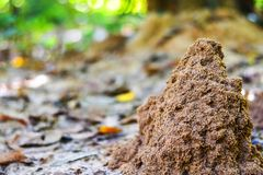High termite hills are located next to the trees in the forest. Termite nests that are newly created naturally from the soil in the rainforest Thailand royalty free stock photography