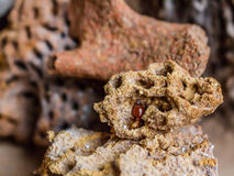 Termite in nests Royalty Free Stock Photography