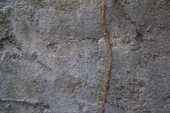 Termite path on concrete wall. Dark grey stock images