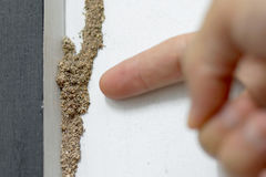 Termite problem in house. Hand pointing at a termite nest on wooden wall of a room / Termite problem in house concept stock photo