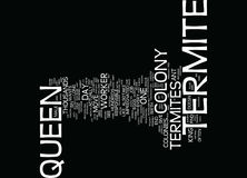 Termite Queen Text Background Word Cloud Concept Royalty Free Stock Image