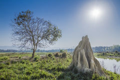 Termite's mound in Bardia, Nepal Stock Image