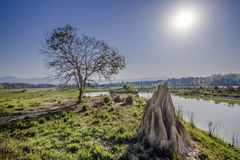Termite's mound in Bardia, Nepal. Termite's mound in Bardia, Terai, Nepal, HDR Royalty Free Stock Images