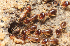 Termite soil Stock Photos
