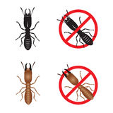Termite and Stop termite sign symbols vector design Stock Images