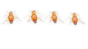 Termite. S eat wood as a danger to residents stock photos
