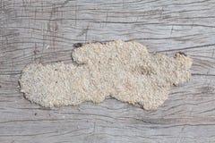 Termite Stock Image