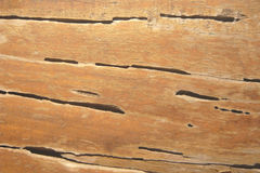 Termite track on wooden wall. Closeup termite track on wooden wall stock photo