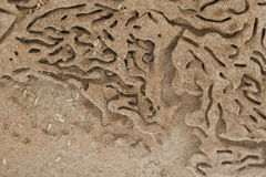 Termite trails landscape Stock Image