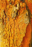 Termite on tree background. Stock Photography
