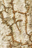 Termite on tree background Stock Image