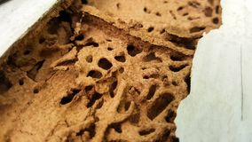 Termite wall damage texture background. This is termite wall damage texture background royalty free stock photography