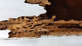 Termite wall damage texture background. This is termite wall damage texture background stock photography