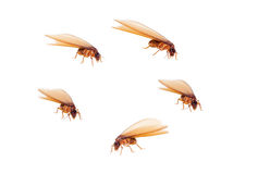 Termite white ant Royalty Free Stock Photography