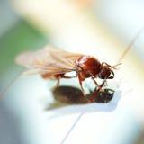 Termite white ant Royalty Free Stock Image