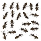 Termite workers Royalty Free Stock Photo
