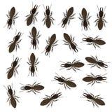 Termite workers. 3d render of termite workers Royalty Free Stock Photo