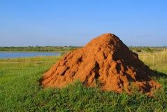 Termitedamm Stockbilder