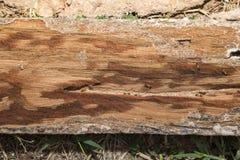Termiten diese zerfressende Täfelung Stockfotos
