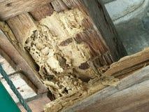Termiten essen Holz lizenzfreies stockfoto