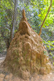 Termiten-Hügel Lizenzfreie Stockfotos