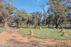 Termiten-Hügel in der ländlichen Landschaft Lizenzfreies Stockfoto