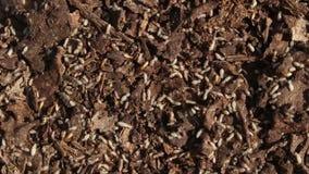 Termiten im Nest stock footage
