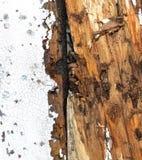 termite gehen unterzubringen vektor abbildung bild 53744015. Black Bedroom Furniture Sets. Home Design Ideas