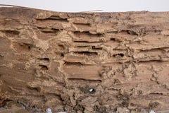 pdagogisches termiten haus stockfotos 198 pdagogisches. Black Bedroom Furniture Sets. Home Design Ideas
