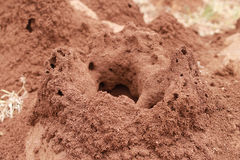 Termitenhügel Stockfotografie