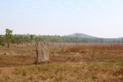 Termitenhügel Stockbilder
