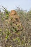 Termitenhügel Lizenzfreie Stockfotografie