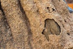 Termitennest Stockbild