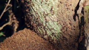 Termiter på ett träd arkivfilmer