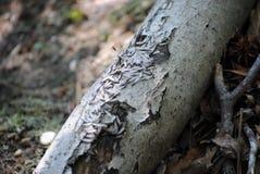 termites Photographie stock libre de droits