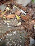 termites Fotografering för Bildbyråer